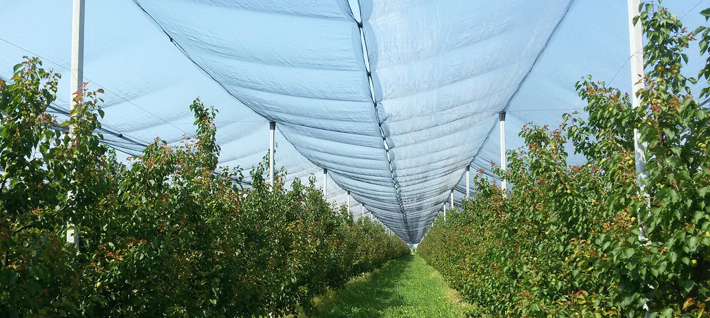 prodotti-agricoli-antigrandine-3