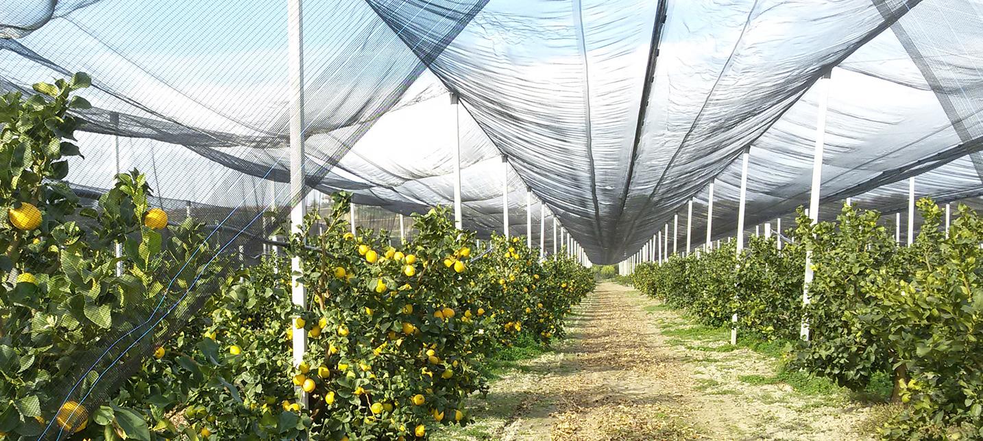 prodotti-agricoli-antigrandine-4