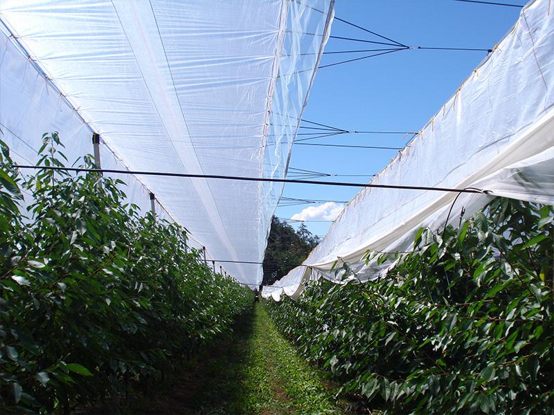 teli-agricoli-professionali