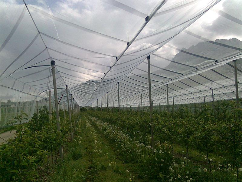 teli-agricoli-professionali-3